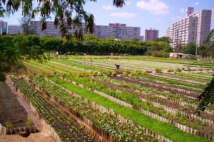 agricultura-cubana-cuba AGRICULTURE dans REFLEXIONS PERSONNELLES